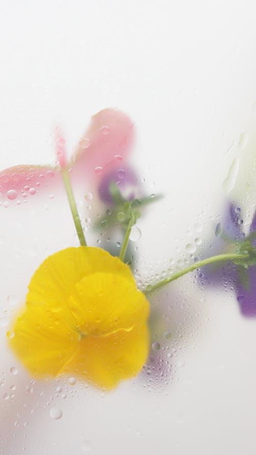 Ilmainen kuvapankkikuva tunnisteilla abstrakti, efekti, erilainen