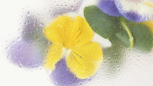 Ilmainen kuvapankkikuva tunnisteilla abstrakti, efekti, h2o