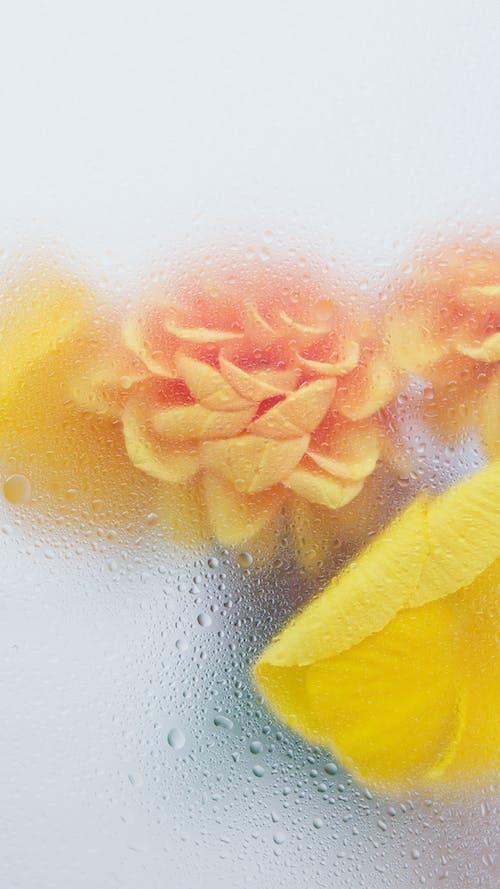 Ilmainen kuvapankkikuva tunnisteilla abstrakti, efekti, flunssa
