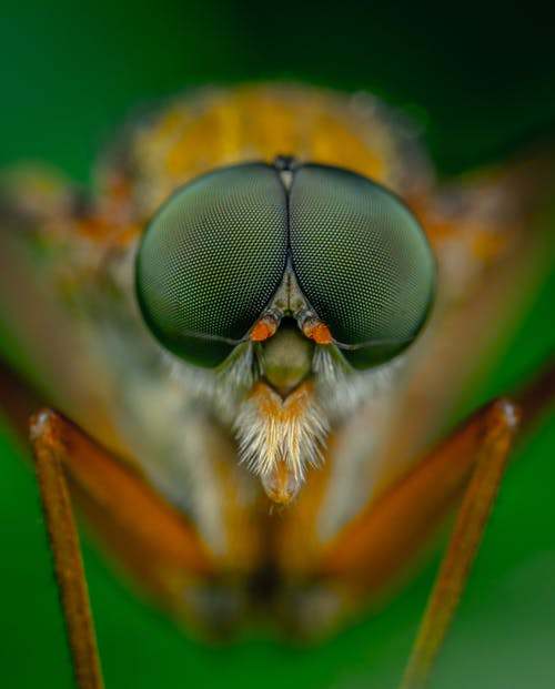 Macro Photography of Green and Brown Insect