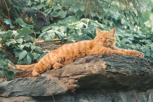 Orange Tabby Cat Lying on Brown Tree Log