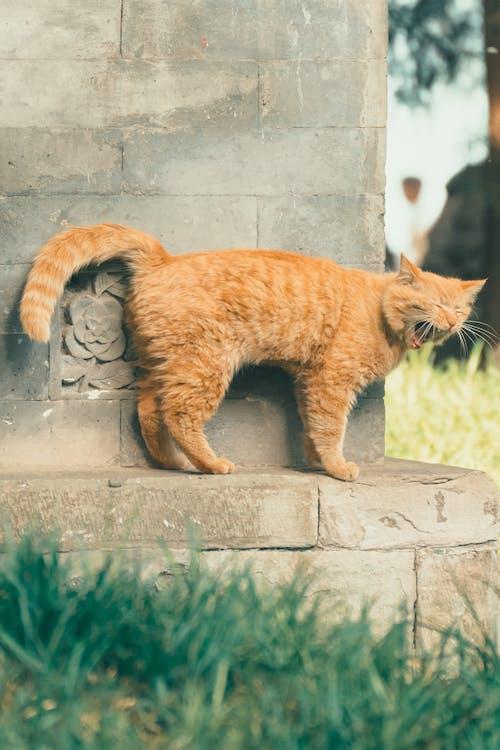 Orange Tabby Cat on Gray Concrete Surface