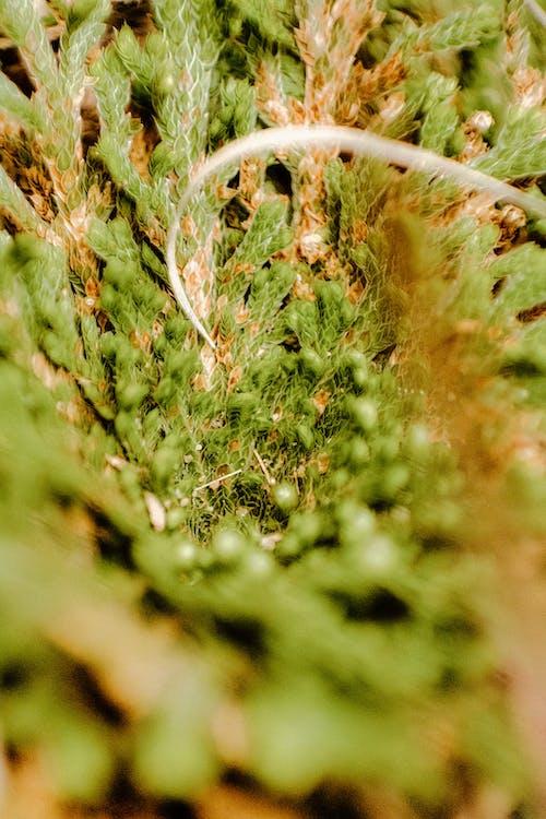 คลังภาพถ่ายฟรี ของ ขาว, ต้นไม้, ทันตกรรม