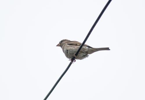 Free stock photo of animal, beak, bill