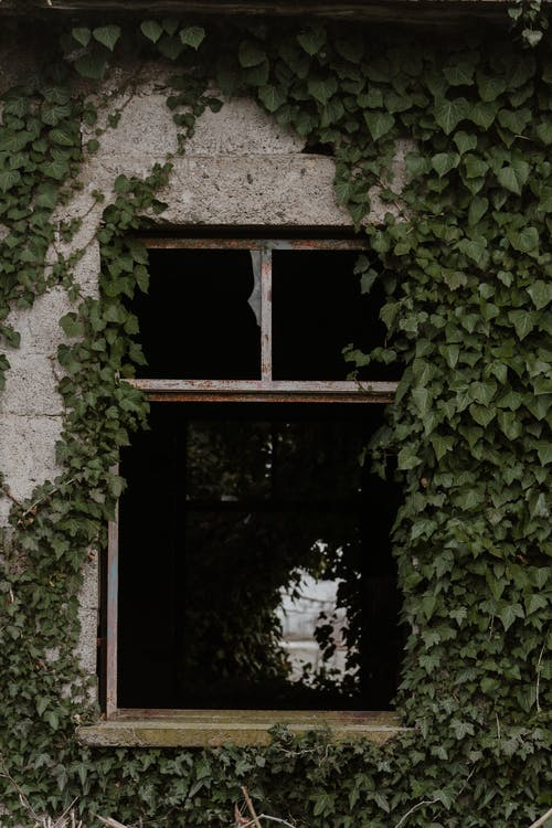 Shabby old stone neglected house with damaged window covered with ivy leaves in countryside
