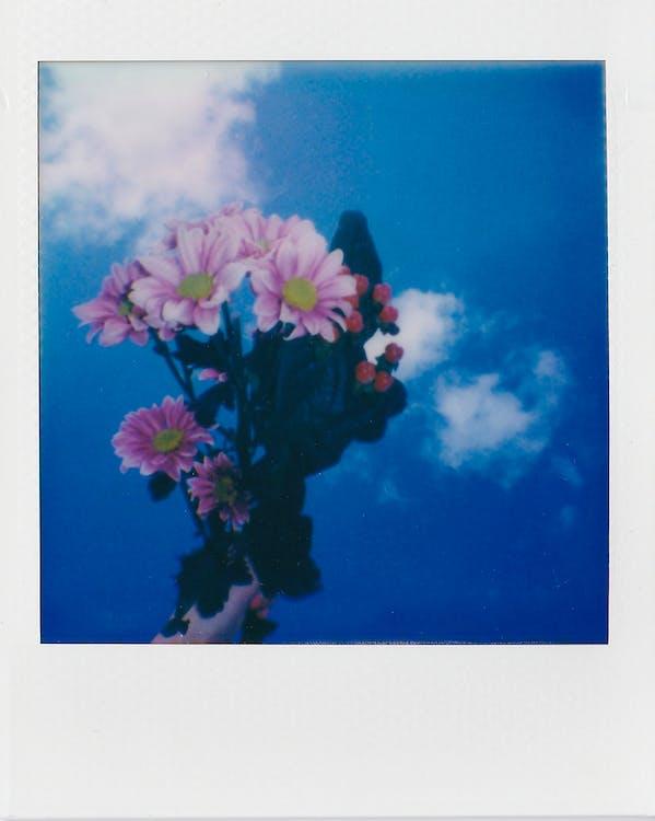 Pink Flowers Under Blue Sky