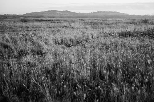 Gratis lagerfoto af agerjord, bane, dyrket jord