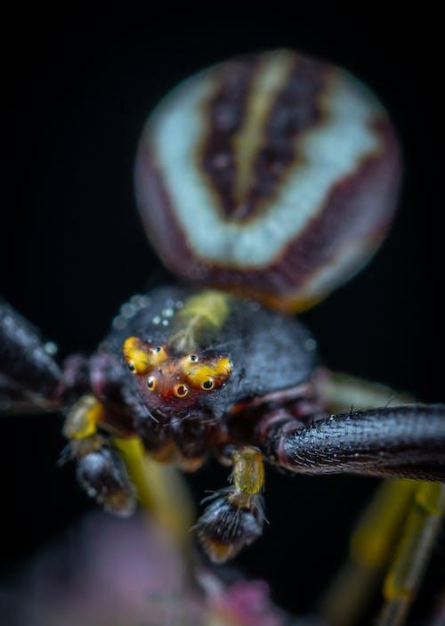 クモ, マクロの無料の写真素材