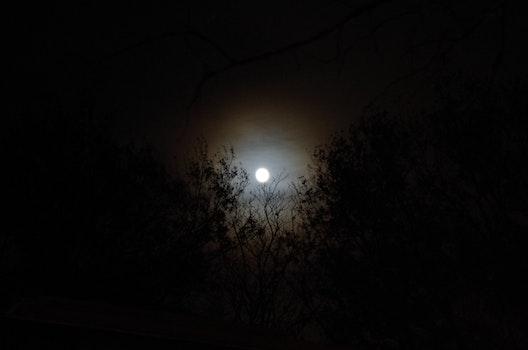 Free stock photo of nature, night, moon