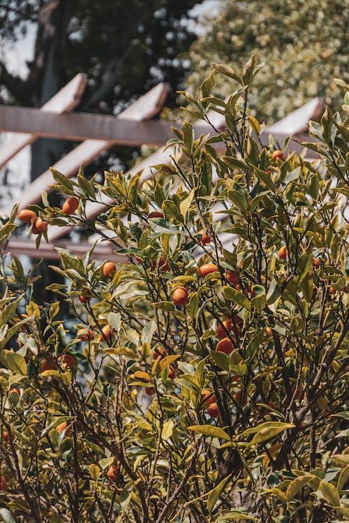 Fotos de stock gratuitas de agricultura, árbol, caer