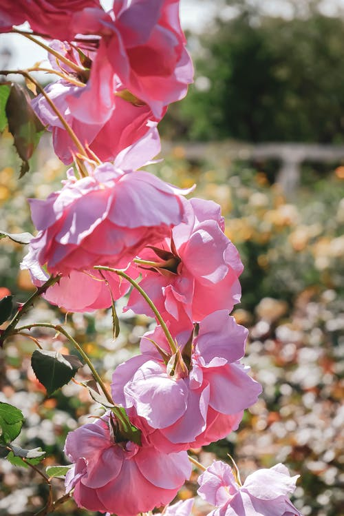 Fotos de stock gratuitas de flor, flores, hermosa naturaleza