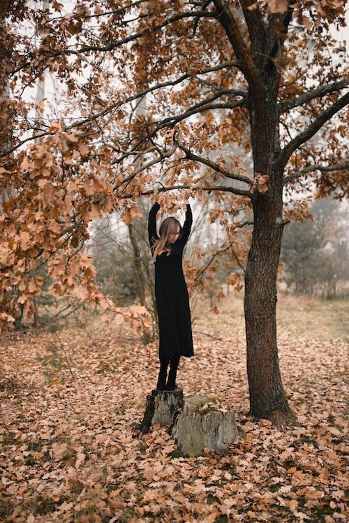 Foto d'estoc gratuïta de a l'aire lliure, arbre, baixant