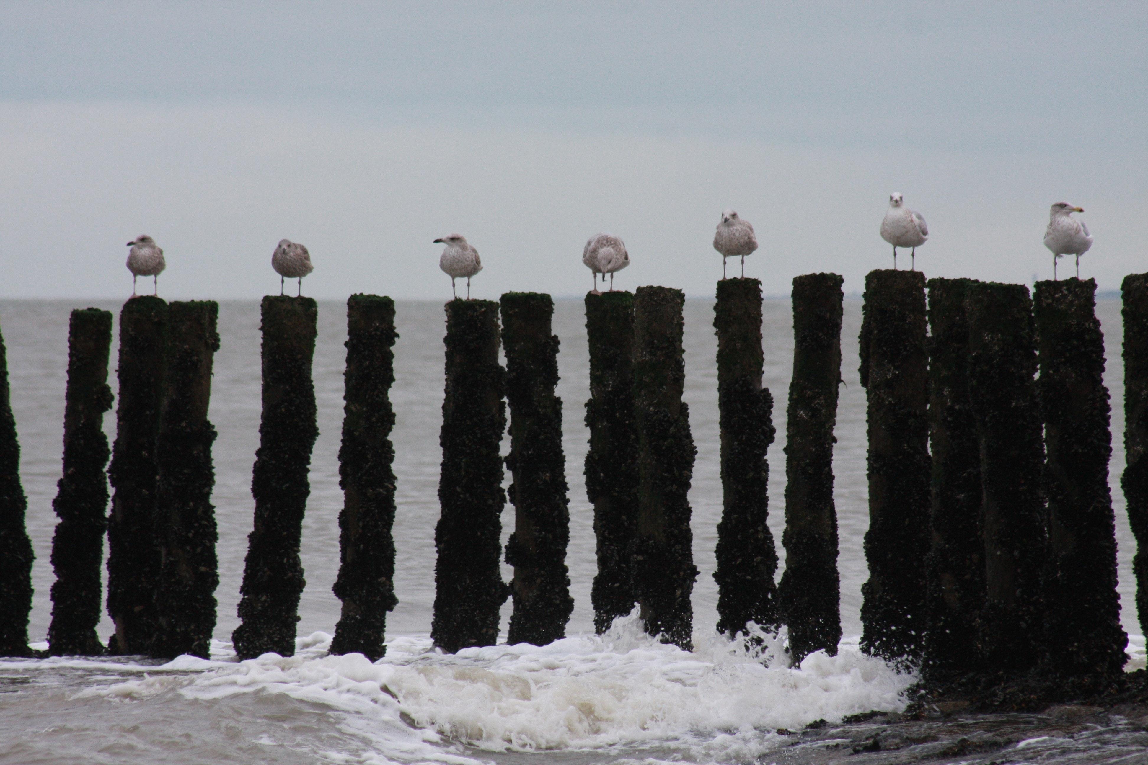 Free stock photo of birds, sea, still