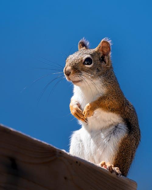 動物, 可愛, 哺乳動物 的 免費圖庫相片