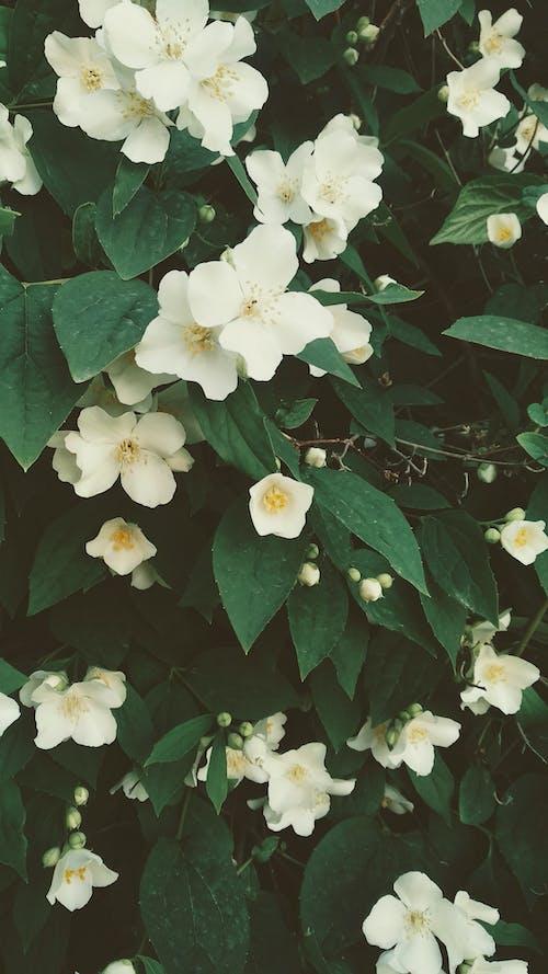 Free stock photo of beautiful flower, bloom, blossom