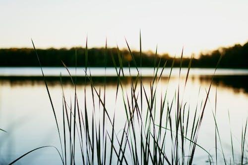 Darmowe zdjęcie z galerii z jezioro, kolor, krajobraz