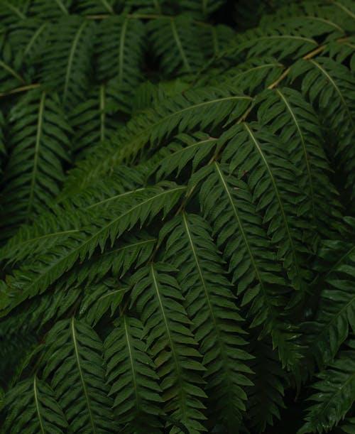 Fotos de stock gratuitas de abundancia, arbusto, bosque