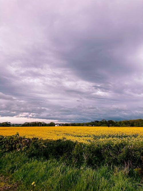 Ingyenes stockfotó farm, felhő, felhős témában
