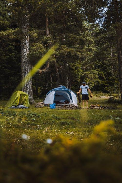 Kostenloses Stock Foto zu abenteuer, baum, camping