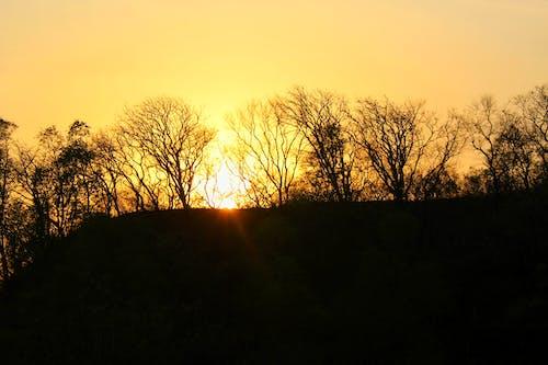 Gratis stockfoto met avondzon, bomen, gouden, gouden zon