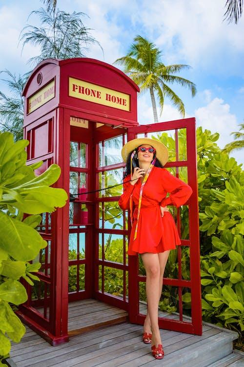 Fotos de stock gratuitas de al aire libre, apariencia, árbol