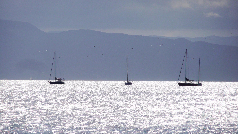Free stock photo of sea, waves, boat