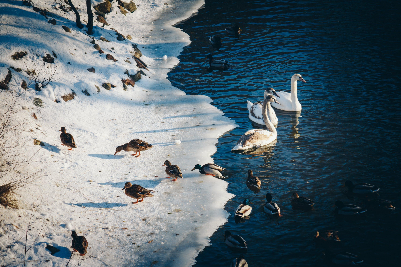 Photo of Ducks Near the Pond