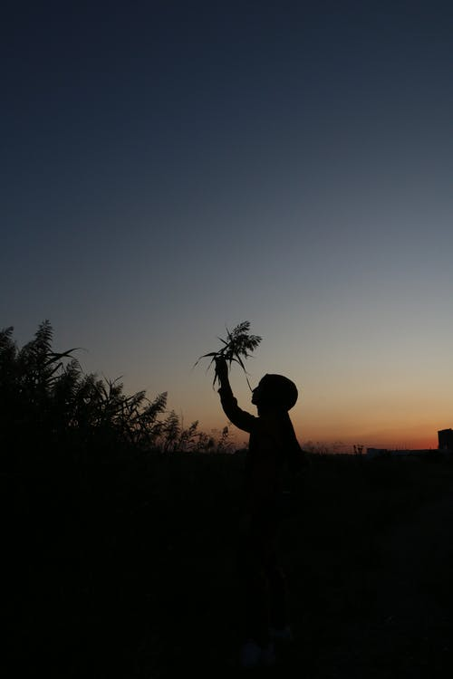 Side view silhouette of anonymous person picking grass in field against cloudless evening sky