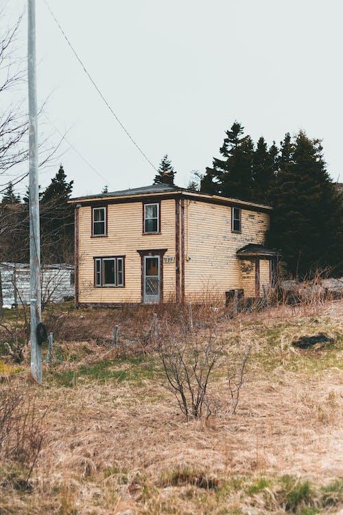 Fotos de stock gratuitas de abandonado, al aire libre, árbol