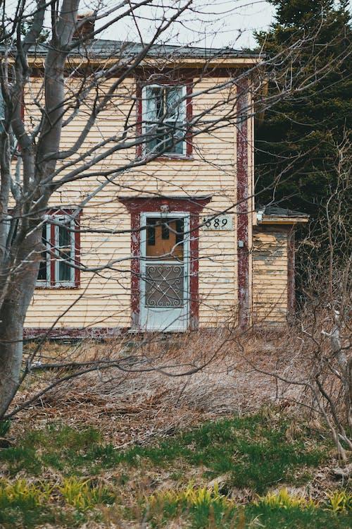 Fotos de stock gratuitas de abandonado, árbol, arquitectura
