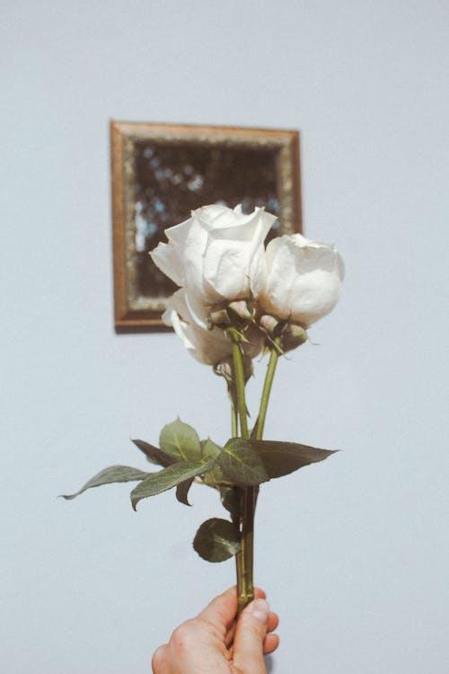 Free stock photo of beautiful flower, blur, bud