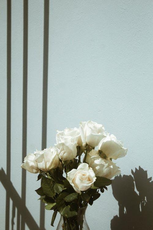 White Flower on White Wall