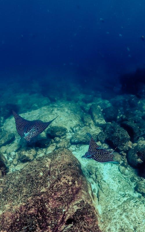 Photo of Stingrays Swimming Underwater