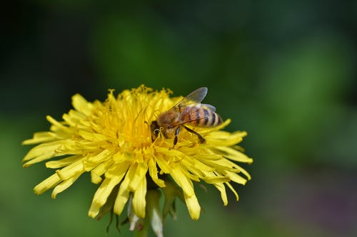 Close Up Photo of Bee On A Yellow Flower