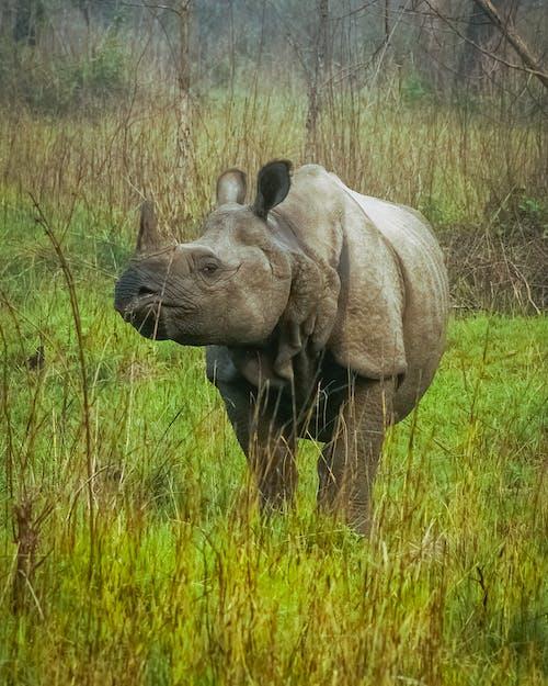 Gratis stockfoto met bedreigde diersoorten, bedreigde soorten, beest
