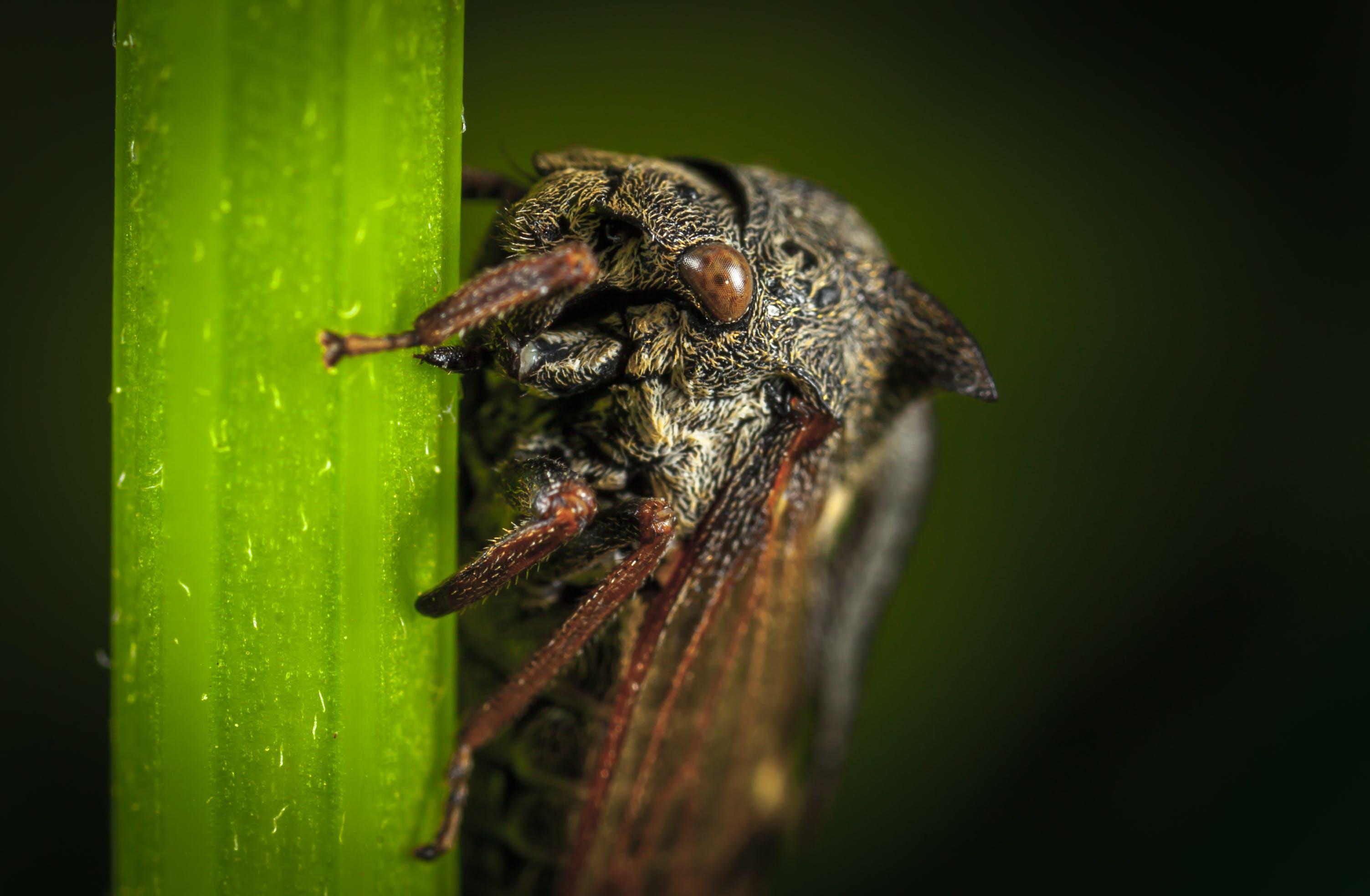 Close Up Photo of Black Cicada on Green Leaf