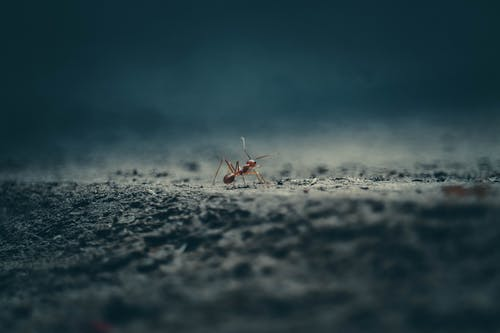 Red Ant On Ground In Close Up View