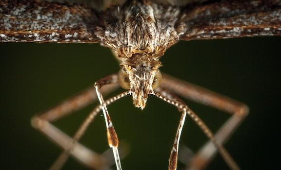 Macro Photography of Brown Plume Moth