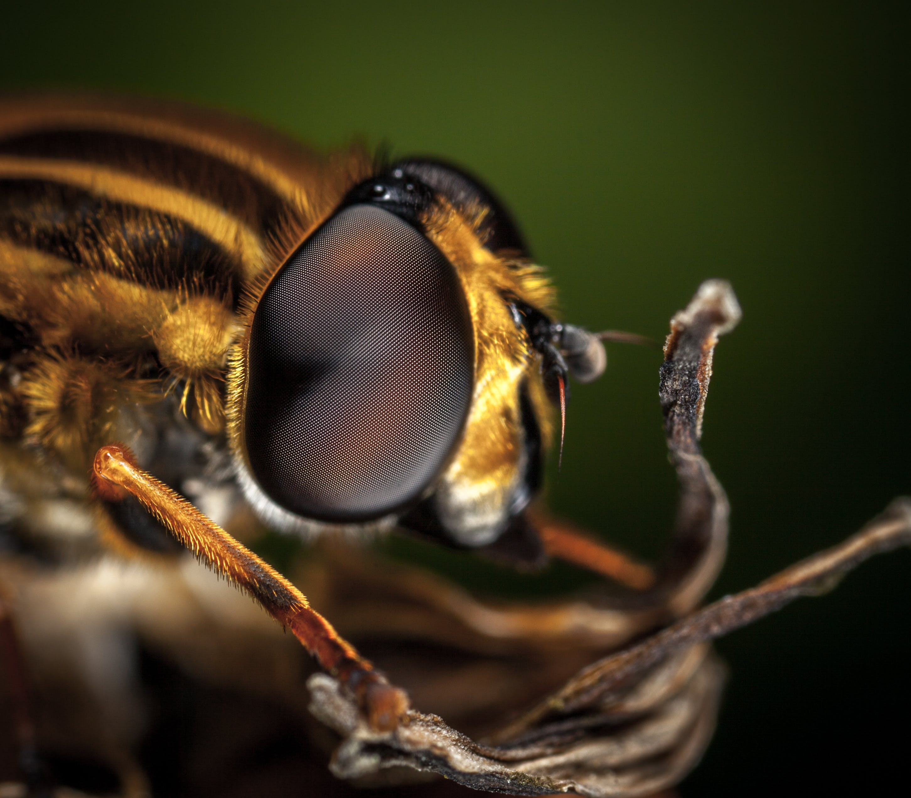 Macro Photography of Bee
