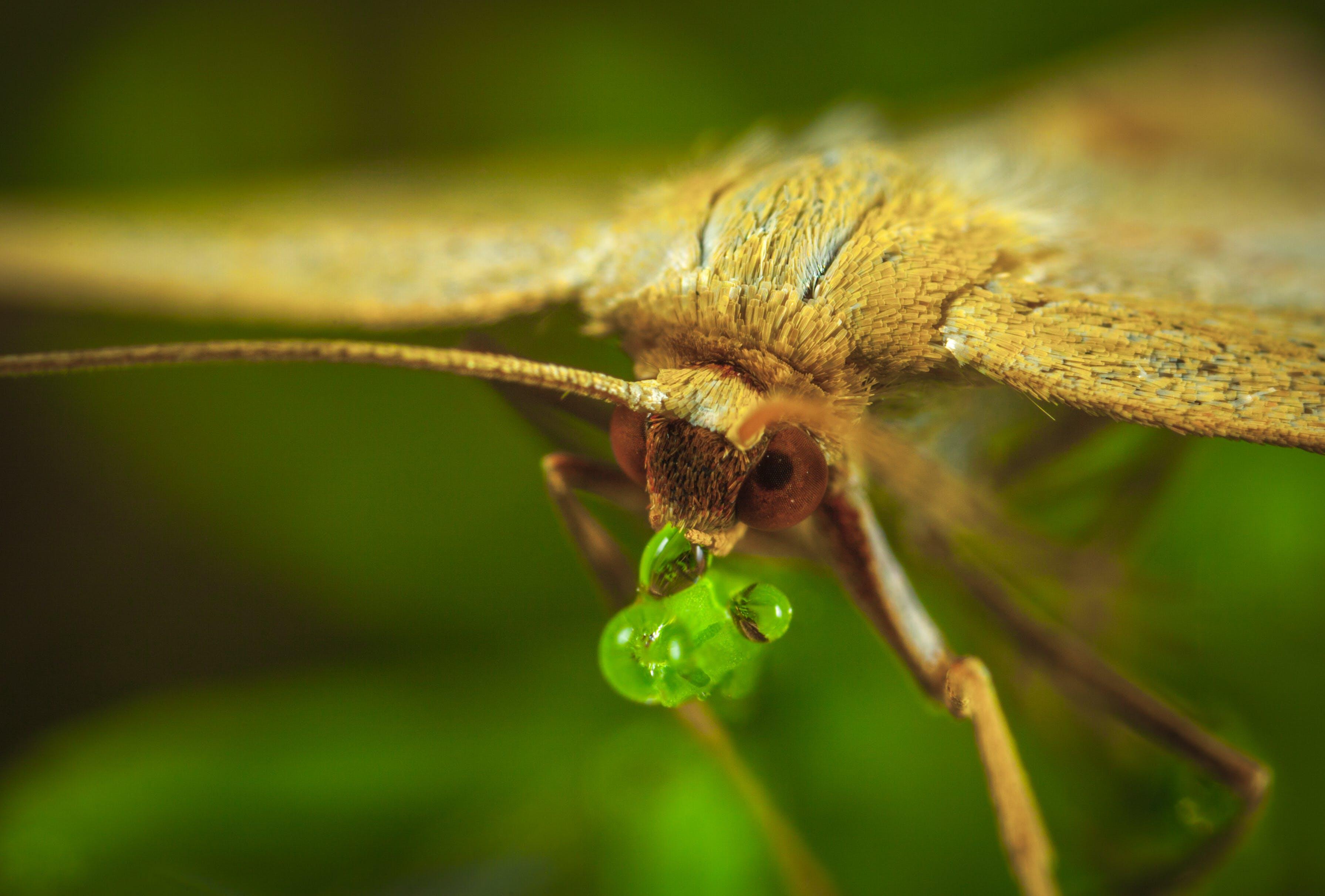 biologie, entomologie, farbe