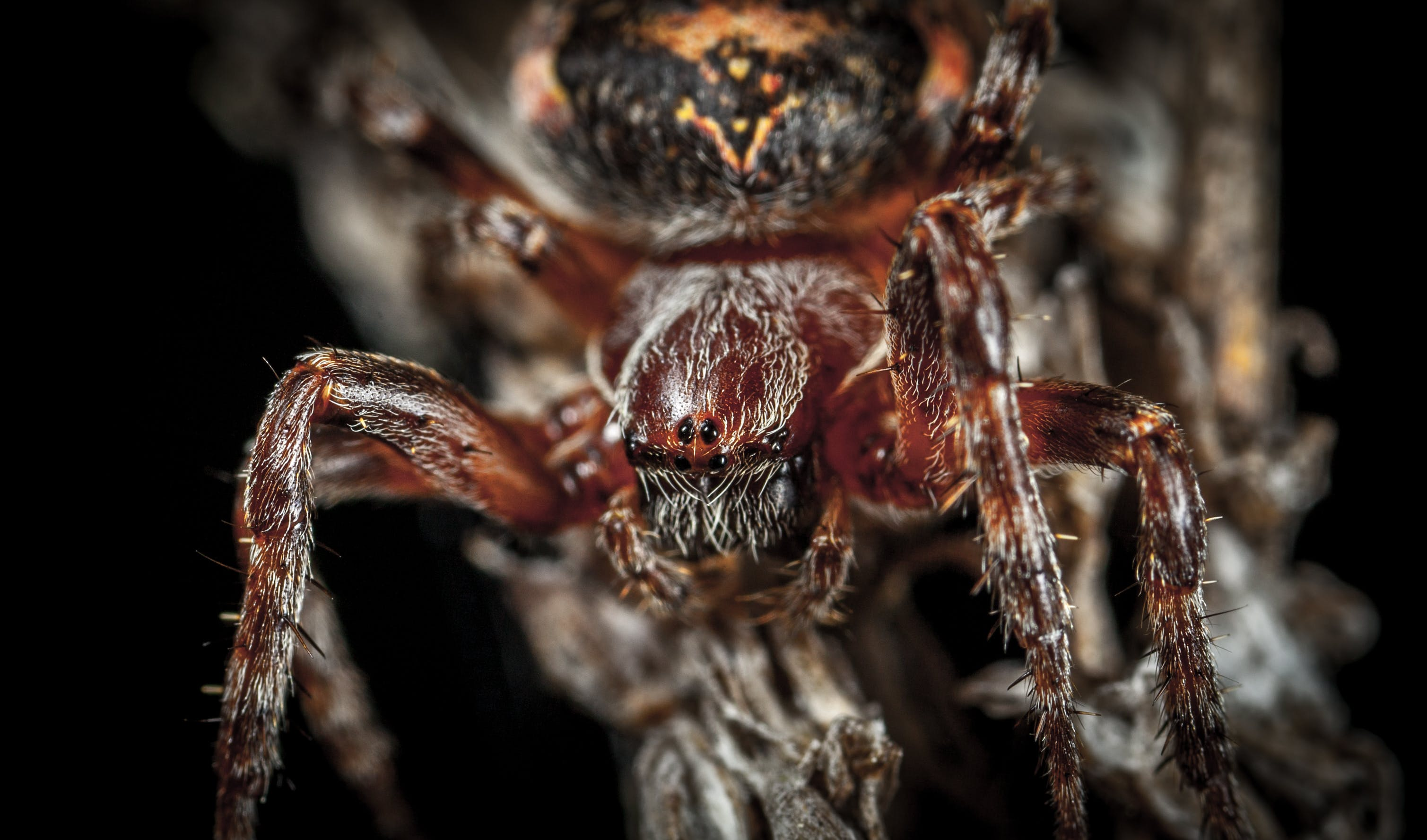 Micro Photography of Spider
