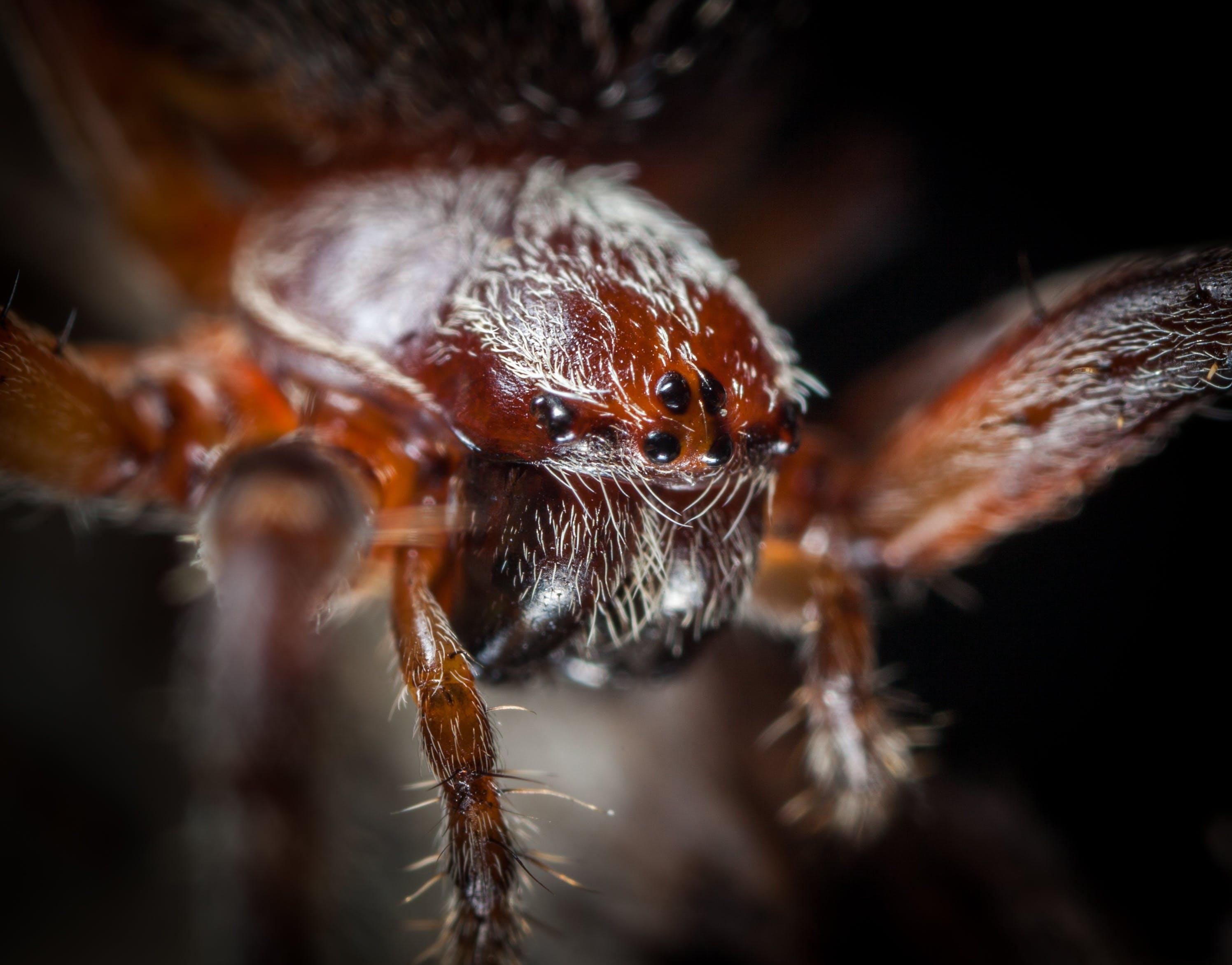 Free stock photo of insect, macro, spider, arachnid