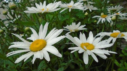 Безкоштовне стокове фото на тему «білий, впритул, жовтий»