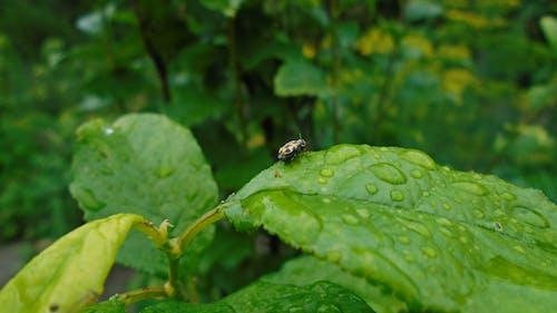 Безкоштовне стокове фото на тему «жовтий, комаха, крапля»