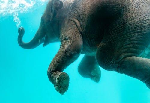 Foto profissional grátis de água, alegre, amplo