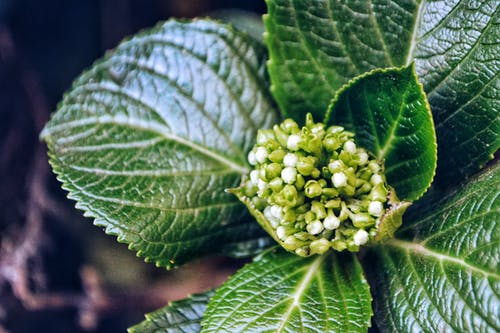 Photo of Green Leaf Plant