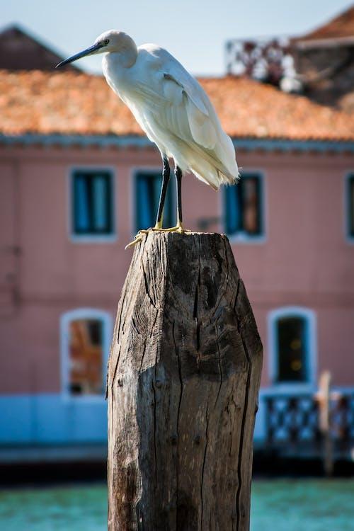 Free stock photo of bird, straight, venice