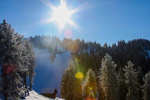 Darmowe zdjęcie z galerii z brasov, jasny, jeździć na nartach
