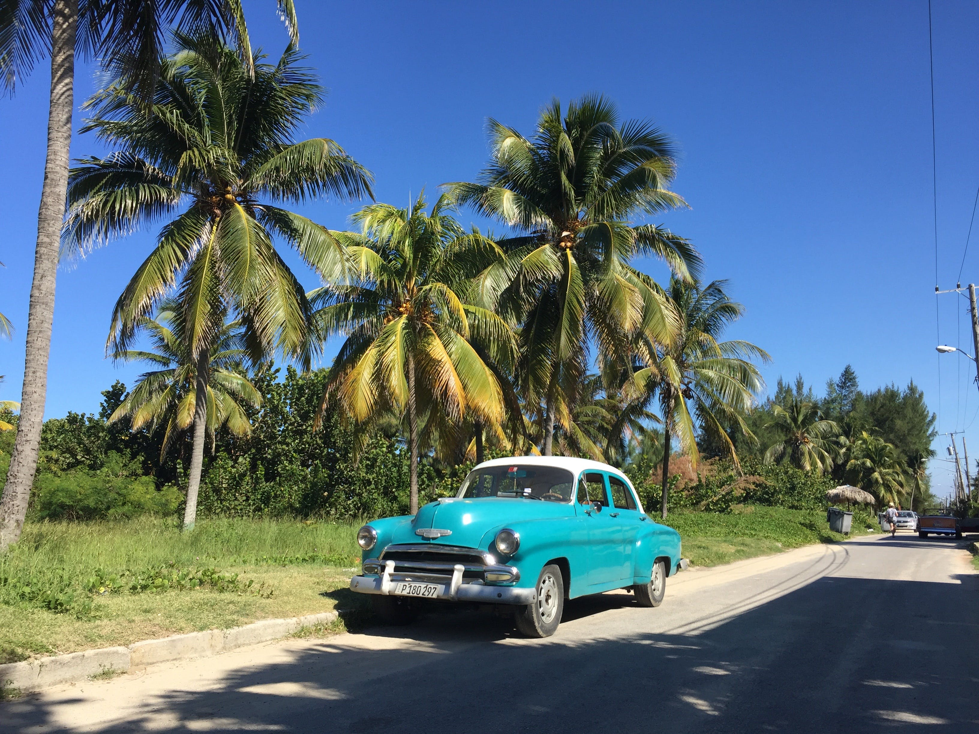 Free stock photo of car, cuba, holidays, palms