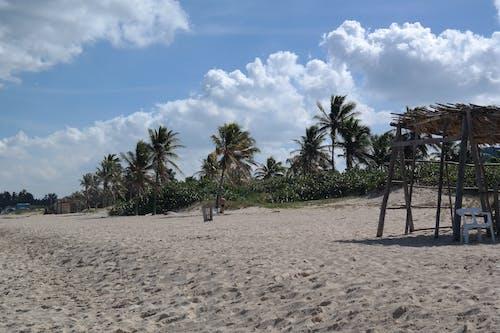 キューバ, ビーチ, ヤシの木, 休日の無料の写真素材